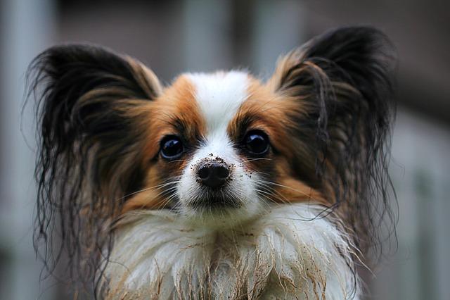 hlava psíka
