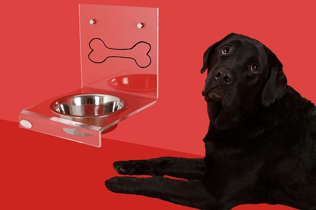 pes u misky
